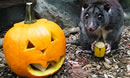 Howl-O-Ween at Cotswold Wildlife Park