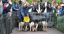 Pig Racing at The Royal Oak