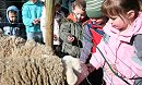 Fun and frolics at Lower Shaw Farm!