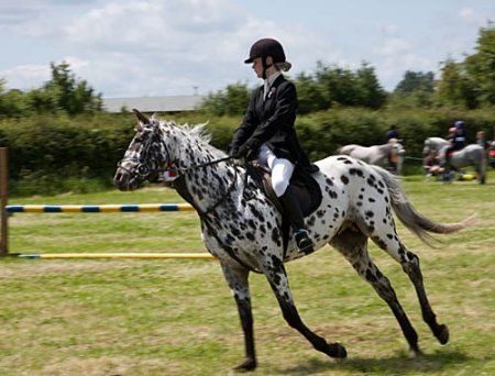 Wanborough Horse & Dog Show 2010