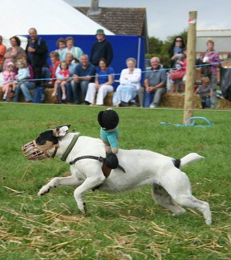Terrier Racing at the Wanborough Show 2009