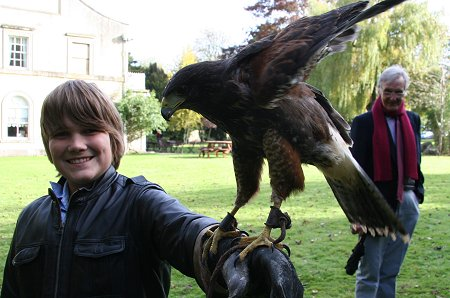 Falconry in Swindon at the Chiseldon House Hotel