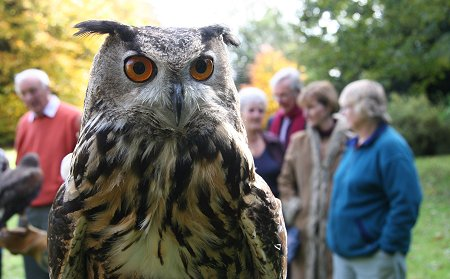 Falconry at Chiseldon House Hotel