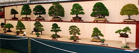 Bonsai Show Swindon