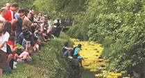 Swindon's Famous Duck Race 2013