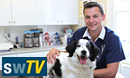 Swindon's Pets On TV