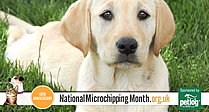 National Microchipping Month