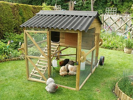 Chicken School in Swindon