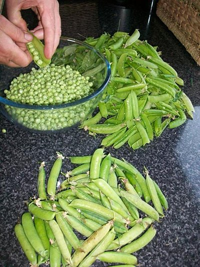 Home-grown beans
