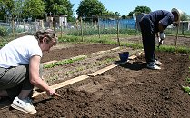 Allotments in Swindon