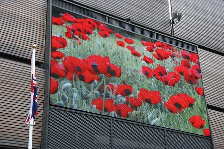 Big Screen Poppies