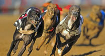 Swindon Greyhounds Meal Offer