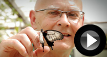 Enjoy A Butterfly Bank Holiday
