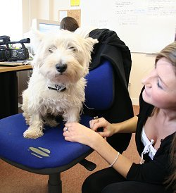 SwindonWeb's office dog Milo gets a trim in Swindon