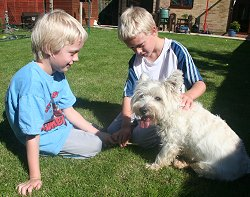 Buddy and Holly two Westies gone missing in Haydon Wick