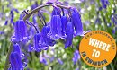 Swindon's Secret Bluebell Garden