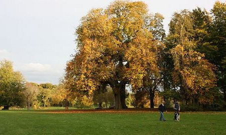 Lydiard Park in autumn