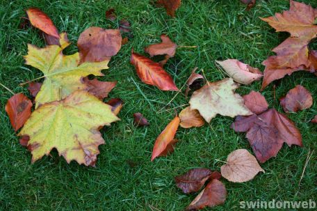Autumn in Swindon 2008